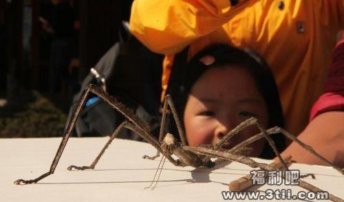 鳄鱼池变许愿池人傻钱多 普洱现巨型竹节虫钢铁战士归来