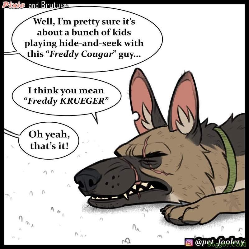 动物漫画《退役军犬与小猫咪》最新故事 布鲁托为猫咪操碎了心