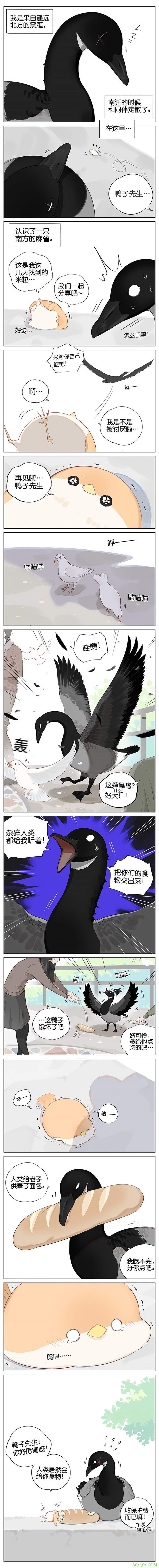 """阿闷aman最新漫画《南方的鸟和北方的鸟》 黑雁被当鸭子""""霸道总裁""""十足"""