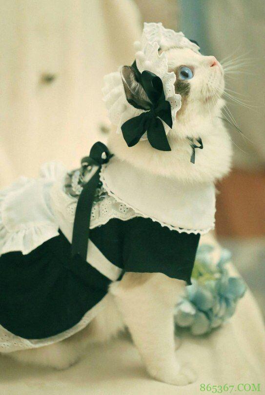 """网友分享了一组""""碧眼+猫耳+超短女仆装""""的图,点进去发现上当了"""